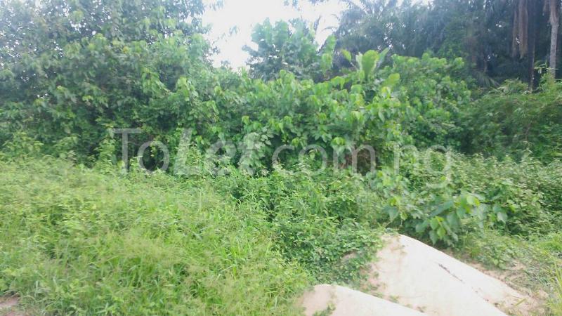 Land for sale Beside Nnamdi Azikiwe Universsity Awka (along Enugu Onitsha Expressway)  Idemili south Anambra - 17