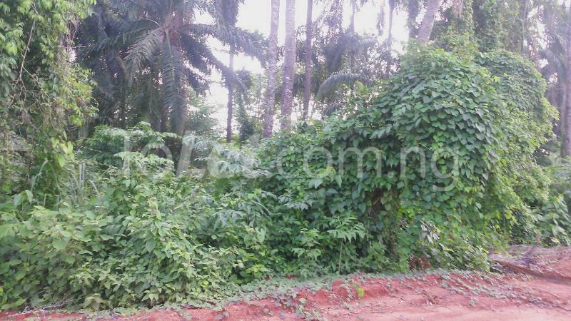 Land for sale Beside Nnamdi Azikiwe Universsity Awka (along Enugu Onitsha Expressway)  Idemili south Anambra - 2