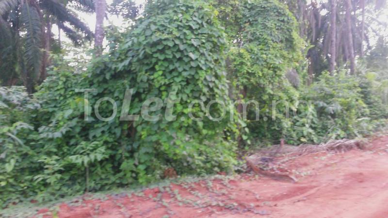 Land for sale Beside Nnamdi Azikiwe Universsity Awka (along Enugu Onitsha Expressway)  Idemili south Anambra - 6