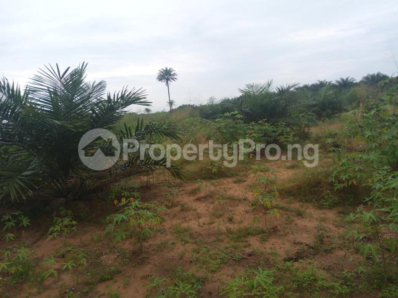 Mixed   Use Land Land for sale Umuekwunne in Ngor Okpuala LGA Owerri Imo - 1