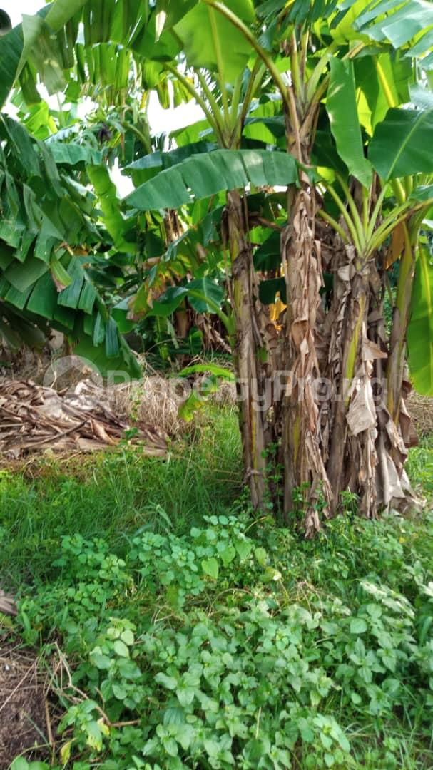 Residential Land Land for sale Off Lagos Ibadan express road Mowe Obafemi Owode Ogun - 3