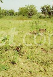 Land for sale - Ilorin Kwara - 0