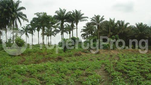 Land for sale Iseyin Oyo road 20 minutes drive from  The road Iseyin Oyo - 1