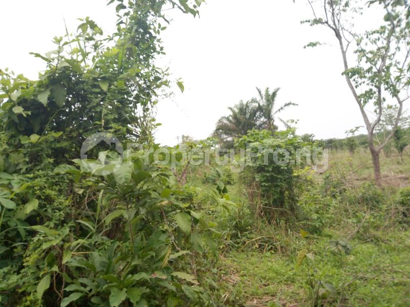 Commercial Land Land for sale sukuru village, Iyana offa off iwo road Iwo Rd Ibadan Oyo - 0