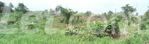 Mixed   Use Land Land for sale Ise/Orun Ise/Orun Ekiti - 8