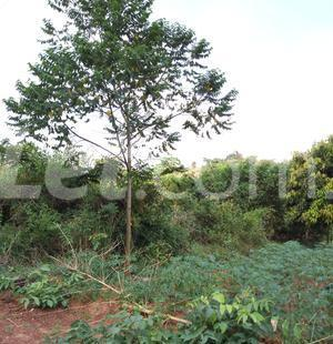 Residential Land Land for sale Nkwelle, Anambra Oyi Anambra - 5