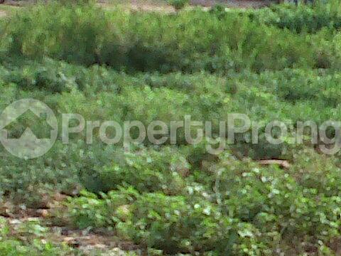 Residential Land Land for sale - Ejigbo Ejigbo Lagos - 1