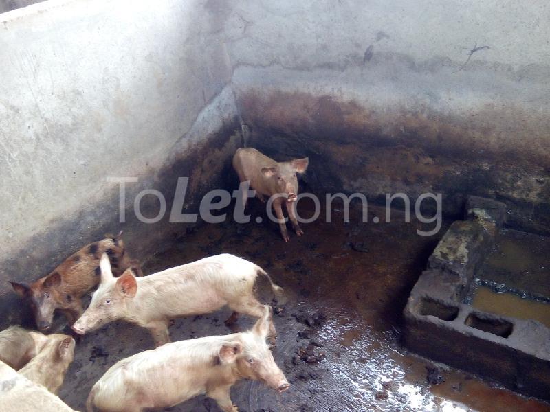 Land for sale Ijagba Oko-ewe, Ado Odo/Ota Ogun - 3