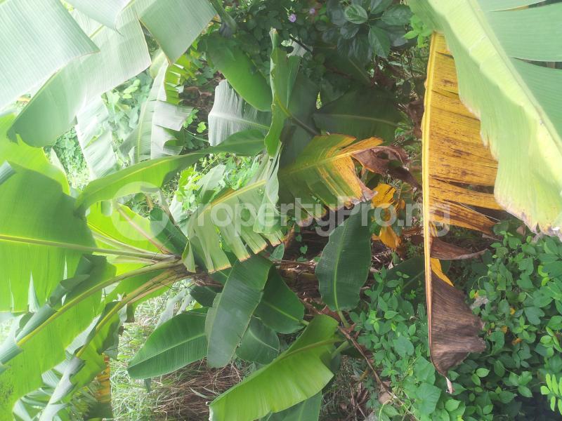 Mixed   Use Land Land for sale -  Ibeshe Ikorodu Lagos - 1