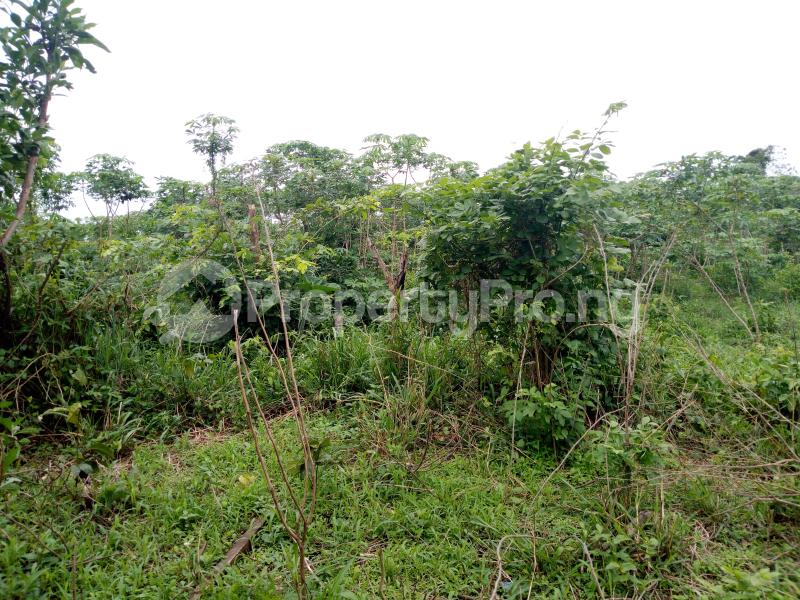 Commercial Land Land for sale Olode Village Ibadan Oyo - 2