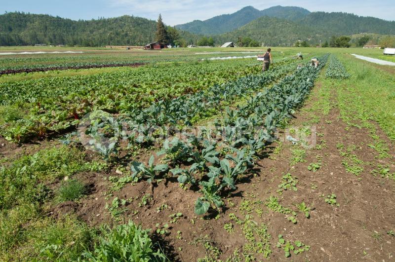 Commercial Land Land for sale Abule ojo village Ogun state Ode Remo Remo North Ogun - 0