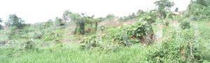 Mixed   Use Land Land for sale Ise/Orun Ise/Orun Ekiti - 12