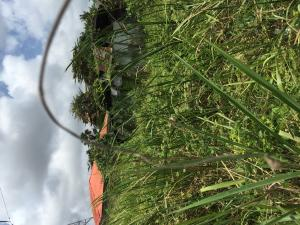 Commercial Land Land for sale 2nd second gate  Agboju Amuwo Odofin Lagos
