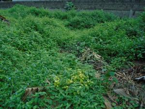 Land for sale - Ojuelegba Surulere Lagos