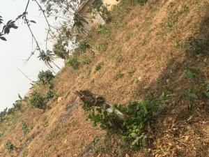 Land for sale Ilerin via ayegunle ilesha Ilesha East Osun