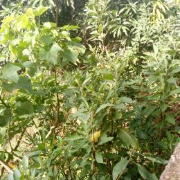 Commercial Land Land for sale Almadu Bello way,VI Ahmadu Bello Way Victoria Island Lagos