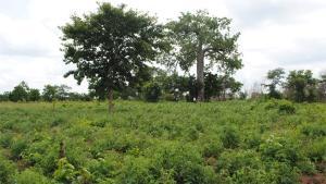 Land for sale Ilogun Orile via Olorunda Yewa North  LG, OGUN state, 10 minutes drive from Road  Yewa North Yewa Ogun