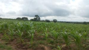 Land for sale 103 acres of land in Ipeba, Oyo state Oyo Oyo