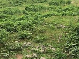 Land for sale Victoria Island Lagos