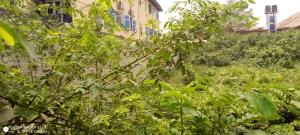 Commercial Land Land for sale 6, Fashoro str, Surulere Lagos. Ojuelegba Surulere Lagos