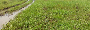 Residential Land Land for sale Umuetchem Etche Port Harcourt Rivers