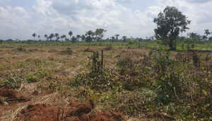 Commercial Land Land for sale abraka Ethiope East Delta
