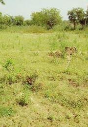 Land for sale - Ilorin Kwara