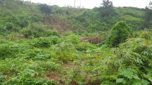 Residential Land Land for sale Emeka Nwogu Street  Asokoro Abuja