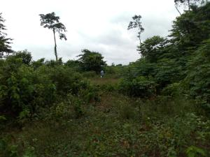 Mixed   Use Land Land for sale Ute community, ward 6 uhunmode local government area. Along auchi-Lagos road  Uhunmwonde Edo