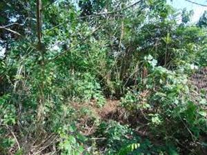 Commercial Land Land for sale After omi adio Ido Oyo