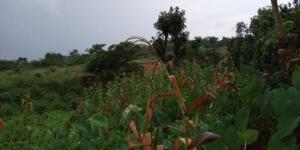 Mixed   Use Land Land for sale Nsugbe,close to Nwafor Orizu College of Education, Nsugbe Anambra East Anambra