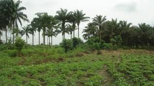 Land for sale Aiyedun village off Iseyin Abeokuta expressway, 30 minutes drive from road Iseyin Oyo