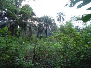Residential Land Land for sale Near Amen Estate 2 Eleko Ibeju-Lekki Lagos