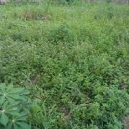 Land for sale UMUHU Ngor-Okpala Imo