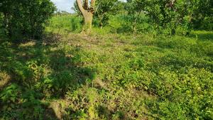 Commercial Land Land for sale Access from Airport Road  Pyakassa Abuja