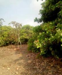 Commercial Land Land for sale   Ogbomosho Oyo