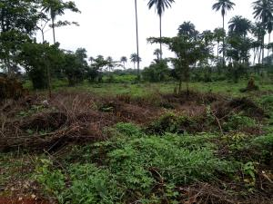 3 bedroom Residential Land Land for sale Okomo community Central Edo