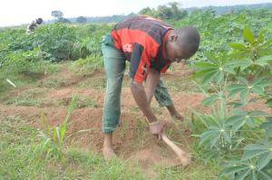 Land for sale  Behind Shina farm Iseyin Oyo express  Way, opposite Oje village, iseyin LG Iseyin Oyo - 0