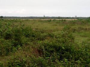 Land for sale ibeju lekki Ibeju-Lekki Lagos - 0
