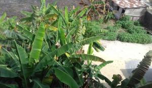 Land for sale Majek Sangotedo Ajah Lagos
