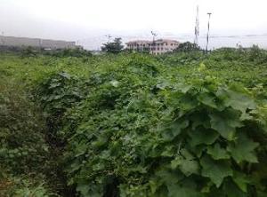 Land for sale IDI ORO Mushin Mushin Lagos