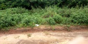 Mixed   Use Land Land for sale 7th Avenue Gwarimpa Gwarinpa Abuja