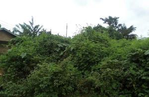 Land for sale Akinyele, Oyo, Oyo Ajibode Ibadan Oyo