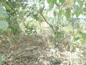 Residential Land Land for sale - Wuye Abuja
