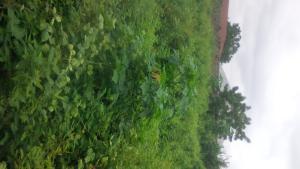 Residential Land Land for sale Ayegu, Tipper garage, New Garage  Odo ona Ibadan Oyo