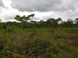 Land for sale Barack's Odo omu area iseyin Oyo road Iseyin Oyo