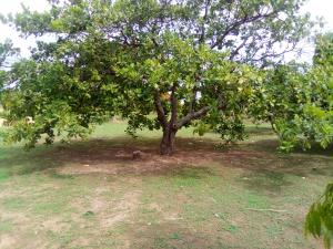 Mixed   Use Land Land for sale Ungwan Doma Along Abuja Kaduna Way Kaduna South Kaduna