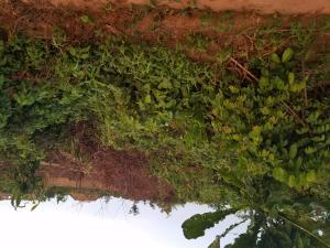 Mixed   Use Land Land for sale Ofuwengbe community, off irhirhi road,off airport road. Oredo Edo