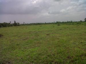 Residential Land Land for sale - Eleko Ibeju-Lekki Lagos - 0