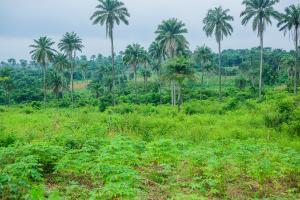 Mixed   Use Land Land for sale Siun Sagamu Sagamu Ogun